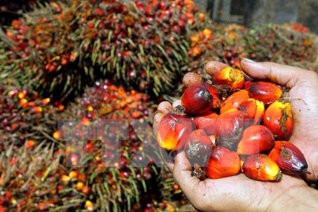 印尼和马来西亚计划成立棕榈油生产国委员会 hinh anh 1