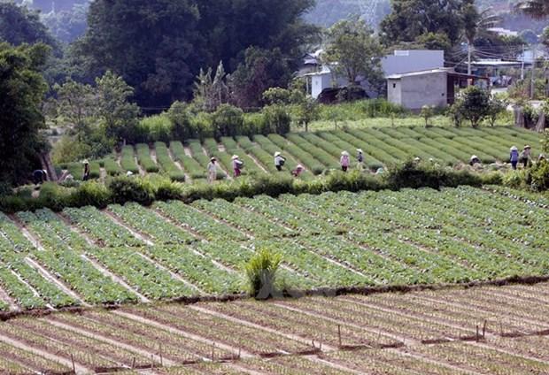 越南大力实现农业结构重组 hinh anh 1