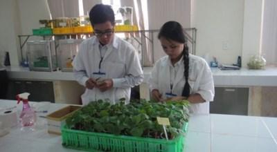 融入全球经济的背景下为农业破解难题(二):探寻增强越南农产品竞争力之道 hinh anh 1