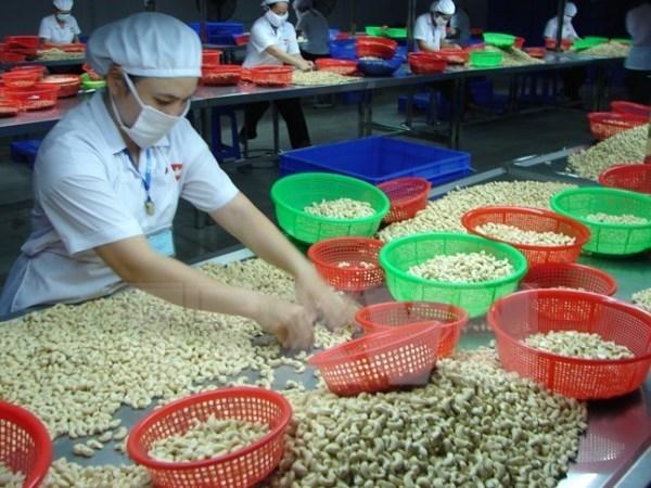越南腰果占全球出口额的一半 hinh anh 1