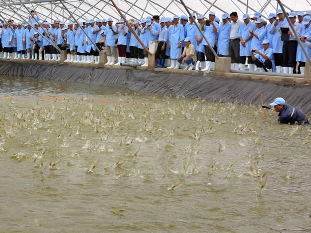 集约化商品虾养殖区项目在越南平定省动工兴建 hinh anh 1