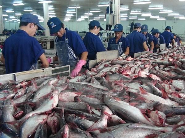 越南查鱼全年出口额预计达17亿美元 hinh anh 1