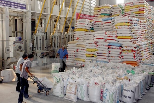 2015年前9个月全国大米出口量达430万吨 hinh anh 1