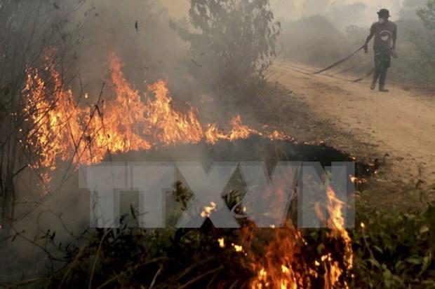 菲律宾客船倾覆和印尼森林大火致使十多人死亡 hinh anh 1