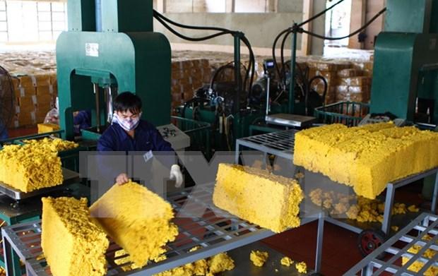 2015年越南橡胶出口有望达16亿美元 hinh anh 1