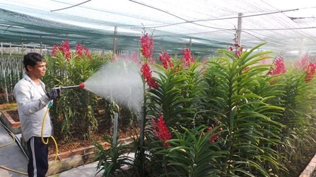 加入TPP越南农产品和劳务市场将迎来诸多机遇和挑战 hinh anh 1
