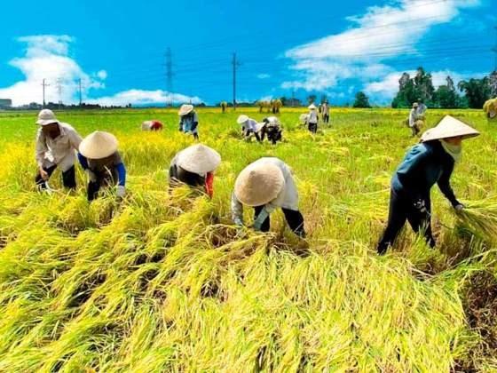 为越南加入TPP后实现九龙江平原地区稳步发展做好准备 hinh anh 2