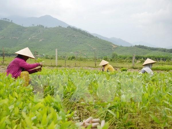 越南农民面临融入世界经济的诸多挑战 hinh anh 1