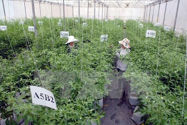 越南农业部门同步展开措施 为融入世界经济做好准备 hinh anh 1