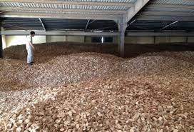 2015年前10个月越南木薯出口总额逾10亿美元 hinh anh 1