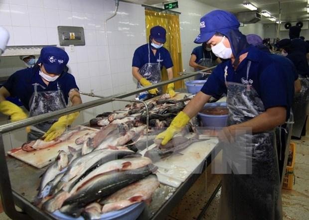 越南对中国查鱼出口量猛增 hinh anh 1