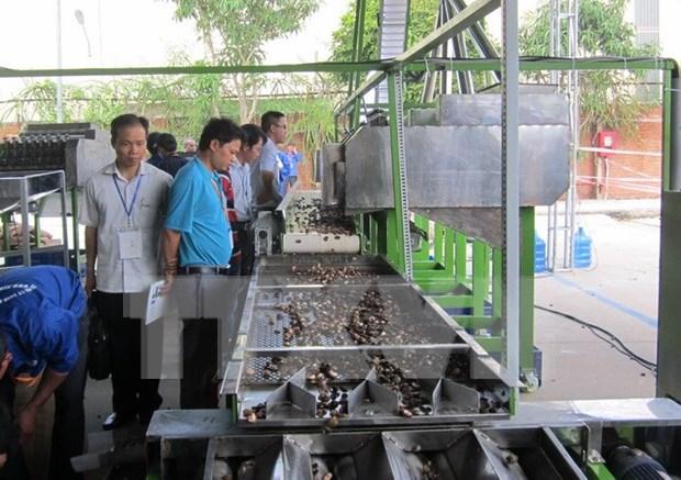 2015年越南腰果加工设备展览会和研讨会在隆安省举行 hinh anh 1