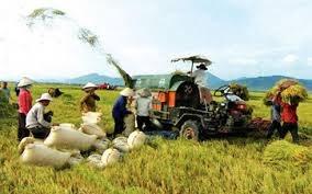 《跨太平洋伙伴关系》是推动农业结构重组的机会 hinh anh 1