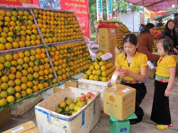 和平省高峰橙子节首次举行 hinh anh 1