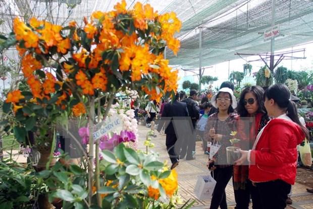 2015年大叻花卉节将于12月底举行 hinh anh 1