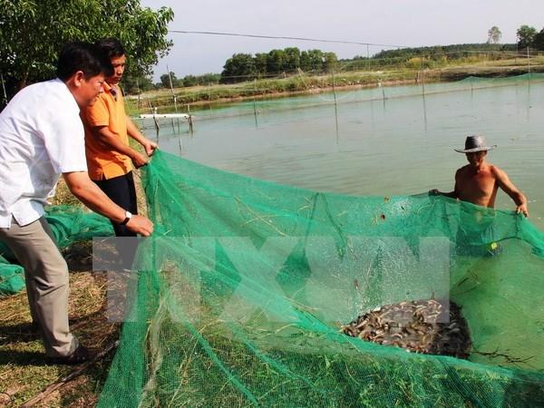 九龙江三角洲地区加大农业结构调整力度有效应对气候变化 hinh anh 1