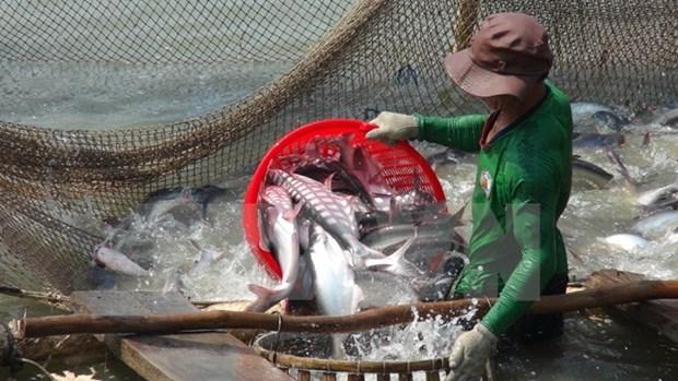 农业与农村发展部部长高德发:不让对美出口查鱼活动被间断 hinh anh 1