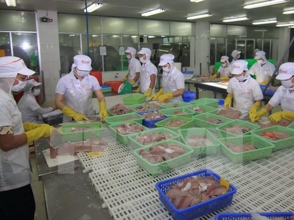 越南查鱼出口产业再遇难题 hinh anh 1