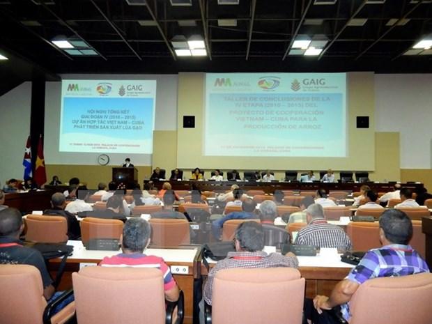 越南与古巴水稻生产合作项目总结会议在古巴举行 hinh anh 1