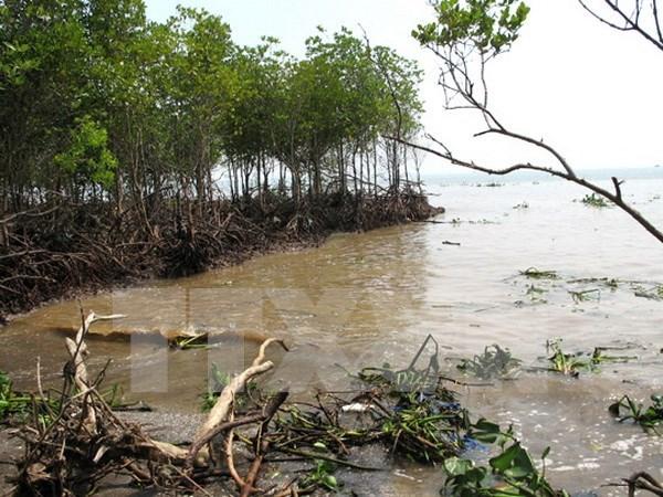 越南与国际社会携手应对气候变化 hinh anh 1