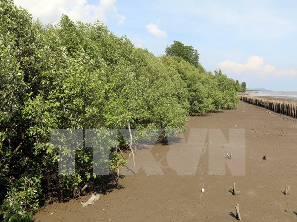 越南计划至2020年将森林覆盖率提升至42% hinh anh 1