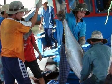 越南金枪鱼价值链商业模式收效不大 hinh anh 1