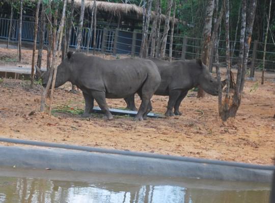 富国野生动物照顾与保护公园正式投运 hinh anh 1