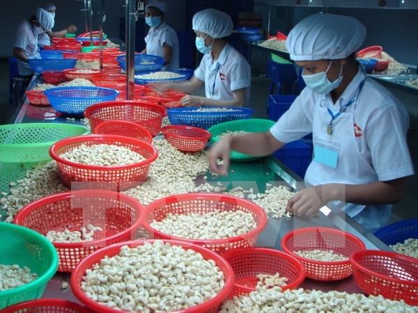 2016年越南腰果对美出口前景乐观 hinh anh 1