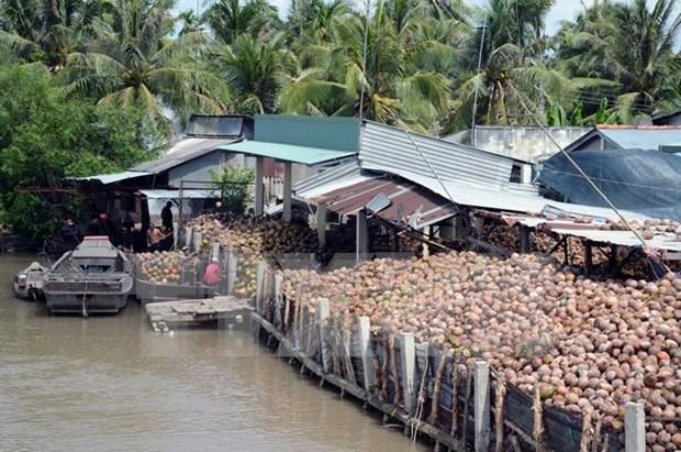 槟知省椰子制品出口额占本省出口总额的30% hinh anh 1