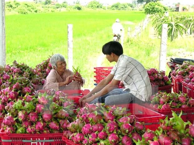 越南蔬果出口创历史新高 hinh anh 1