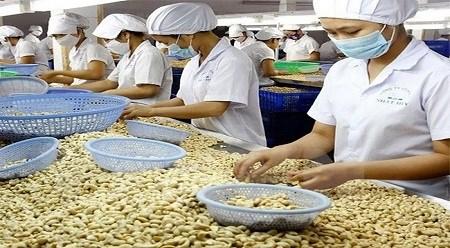 2015年回顾:越南农业发展路程—自《越美双边贸易协定》到《跨太平洋伙伴关系协定》 hinh anh 1