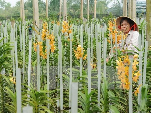 越南西原地区发现8种新兰花 hinh anh 1