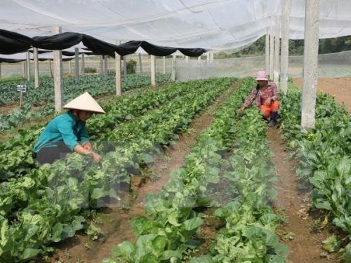 越南南定省与日本宫崎县加强农业合作 hinh anh 1