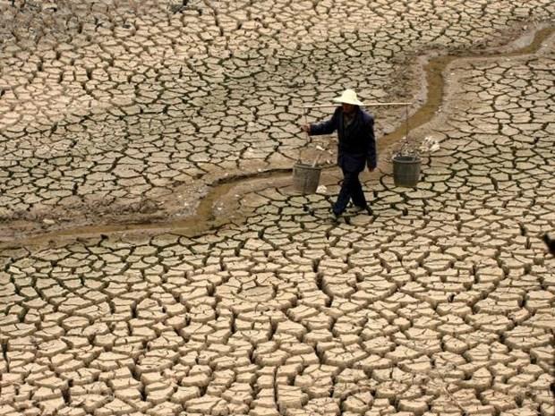 2016年:越南采取配套措施应对气候变化 hinh anh 3