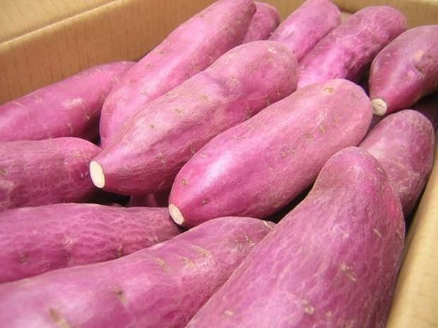新加坡农粮兽医局:越南红薯并非沾染橙剂可安全食用 hinh anh 1