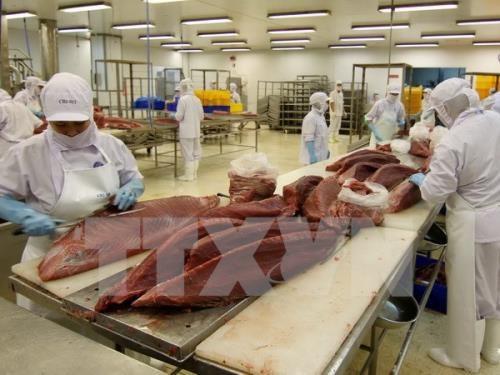 世行:TPP可带动越南出口增长30.1% hinh anh 1
