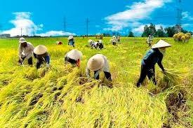 胡志明市农业生产取得可喜成果 hinh anh 1