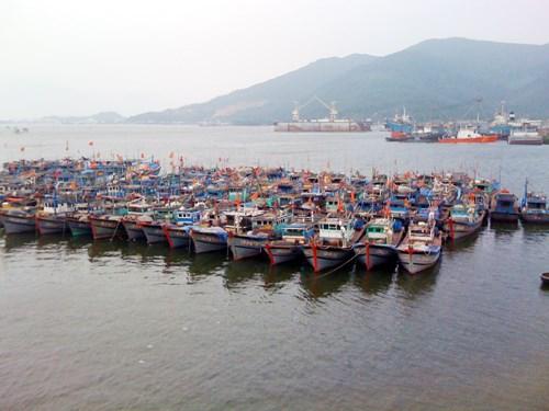 岘港市出资33亿越盾来保护与发展水产资源 hinh anh 1