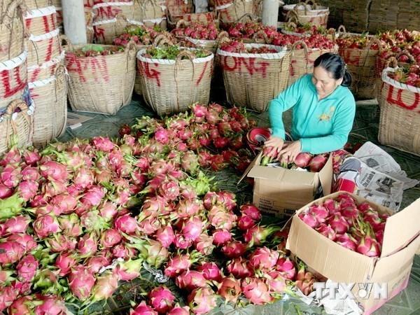 制定符合欧盟惯例的标准 让越南农产品顺利进入欧盟 hinh anh 1