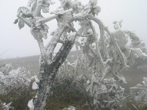 越南北部遭遇罕见低温寒冷天气多地首次下雪 hinh anh 2