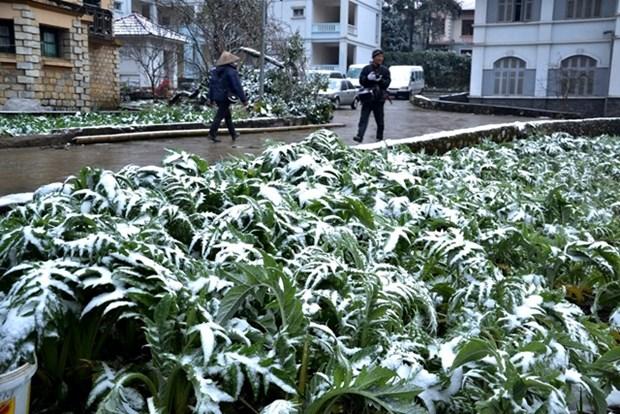 降温降雪严寒恶劣天气给北部各省造成严重损失 hinh anh 1