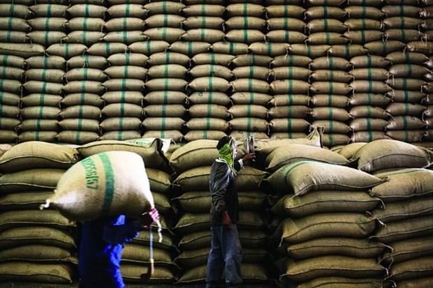 印度超越泰国成为全球第一大大米出口国 hinh anh 1