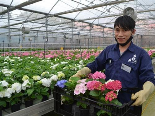 林同省大叻市高技术农业旅游的难忘印象 hinh anh 1