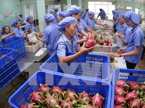 越南水果远销世界60个国家与地区 hinh anh 1
