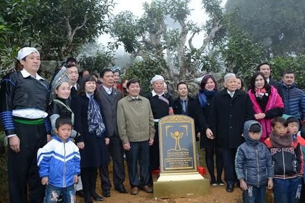越南安沛省400棵古老山雪茶树被列入越南遗产树名单 hinh anh 1