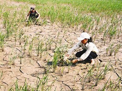 2016年越南中部和西原地区旱情更为严峻 hinh anh 2