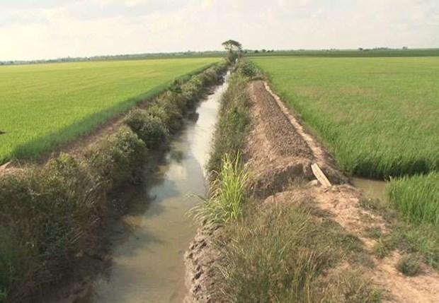 气候干旱与海水入侵给越南多地造成严重影响 hinh anh 2