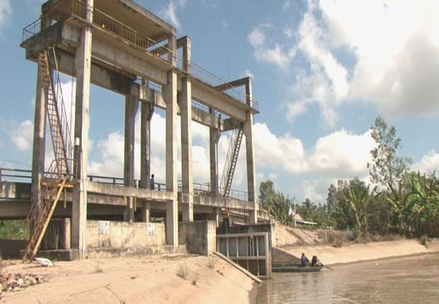 气候干旱与海水入侵给越南多地造成严重影响 hinh anh 3
