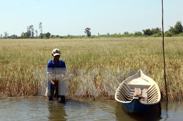 气候干旱与海水入侵给越南多地造成严重影响 hinh anh 4