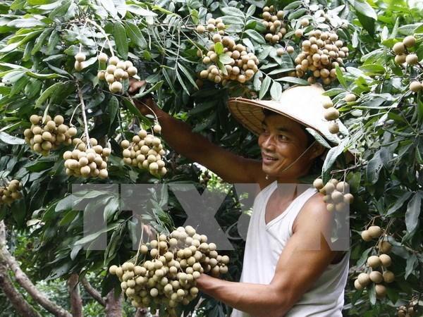 越南蔬果成功进军世界许多苛刻市场 hinh anh 1